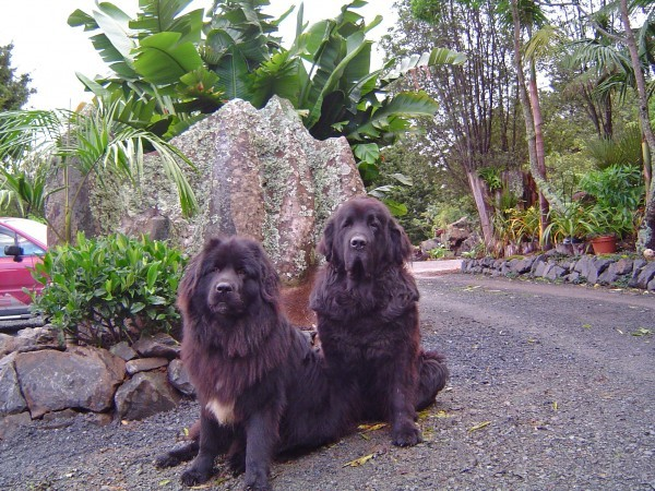 Bjorn & Wolfie waiting for customers to arrive